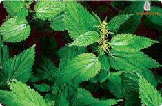 Химический состав растений. Вещества первичного синтеза. Белки и аминокислоты